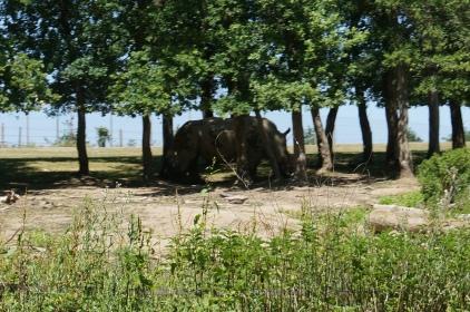 Safari voiture Peaugres
